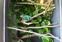 Chameleon terrarium