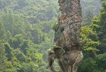 Fil kaya