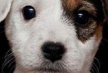 Dog/Puppy