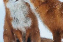 Bilder Tiere