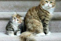 Kediler ve yavruları