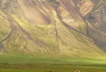 wild horses / by Kim Brewer Hood