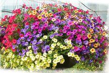 Flowers / by Cheryl Lange
