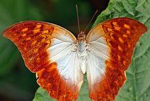 Motýli, motýlci a můry