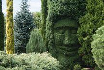 Hedges / Hedges
