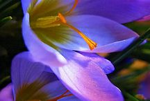 bloeme