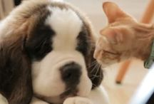 CATS,DOGS&CUTE DOMESTIC ANIMALS / They are beautiful and they love us unconditionally