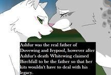 Warrior cats facts
