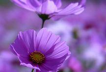 """Kedvenc virágaim. / """"Aki a virágot szereti rossz ember nem lehet! """""""
