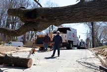 Tree Service / Atlanta Tree Service, Tree Removal and Tree Cutting Services  images.