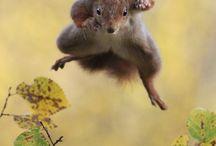 Eichhörnchen :3