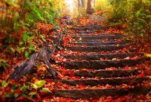 una passeggiata d'autunno