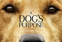 A Dog's Purpose / A film for animal lovers of all ages, A DOG'S PURPOSE shares the heartwarming story of one devoted dog who finds the meaning of his own existence through the lives of the humans he teaches to laugh and love. Watch at home on Digital 2nd August. Blu-ray/DVD 9th August.