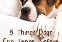 We Love Dogs! Interesting Facts