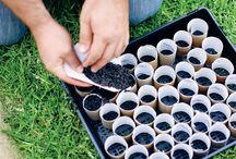 gardening & plants