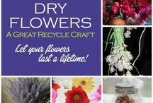 Flower Power / Flower growing and planting tips.  Ecor Friendly and green flower helpers.  Fun flower facts.