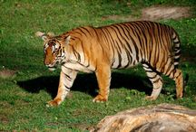 Wildlife India / Here, you can explore wildlife tours, Wildlife destinations, and other Indian wildlife feature updates