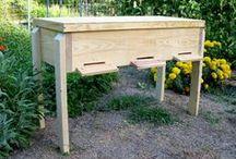 les abeilles  bees
