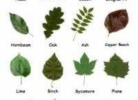 listnate stromy