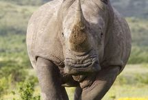 poaching in africa and asia