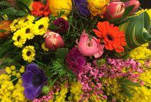 8 marzo mimosa....