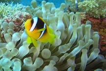 Under the Sea- scuba diving