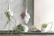 Indoor decor / by Jessie Coccaro