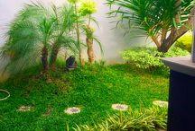 Nature / Garden #nature #green #garden