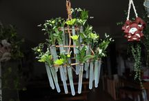 Test tubes / Handmade chandelier with natural materials