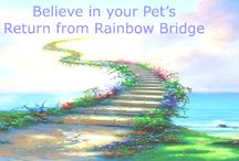 Pet Loss SUPPORT on Facebook w The Animal Medium™ / I invite you to join our caring, supportive, very active and educational Pet Loss Support Group on Facebook, where you can Ask your heart's questions among people who believe in a Pet's NEVER Ending Love! www.brentatwater.com    the LINK: https://www.facebook.com/#!/groups/59877299590/