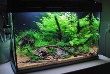 Aquarium / Aquarium fresh water fish