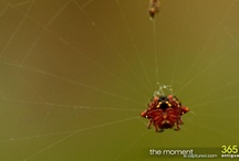 spiders / by Robby Breadner