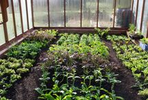 Grow your own / Great ideas for beginner to advanced gardeners.