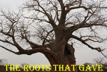 The Roots that gave Birth to Magical Blossoms