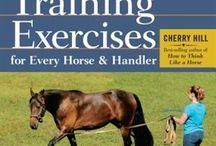 Ground Training horses