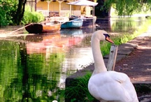 Canal Walks in Uk / There is so much to see on a Canal Walk - take your camera and go for a canal walk. You will be surprised what wild life you see.