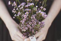 Flowers / by Pernille Hoffmann