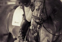 genuine horse love