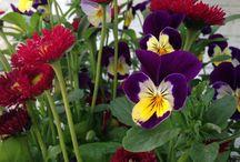 Flowers / Bloemen uit m'n eigen tuin