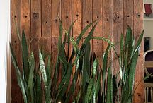 Plantas/Jardim