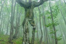 Drzewa rzeźbione przez naturę