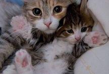 Cuddles!
