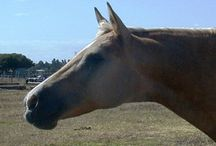 Equine Passive Income Streams / Looking to generate a passive income that relates to horses?  Equus Education explores varying ways to generate passive income that are all horse related - horse ebooks, horse ecourses, horse patterns, horse affiliate programs, etc
