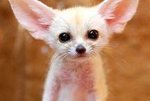 Cute little...