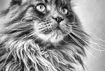 cats / by Monica Adams