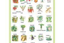 Zelenina-ovocie