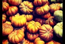 Nature Inspired: Fall Harvest / by Michael Aram