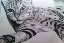 Cat•Lore / Cats • Kittens • Whiskers • Paw prints • Quotes • Crazy Cat Lady  / by fig♢marie