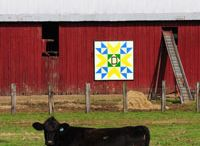 Barn Quilts / by Holly Kincaid