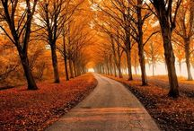 Seasons - Autumn / by Wind_and_Earth